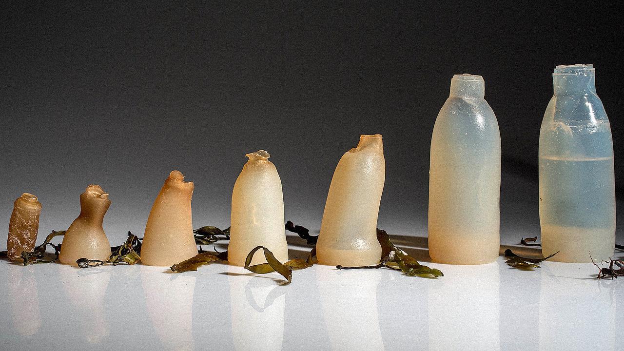 algae-bottle2