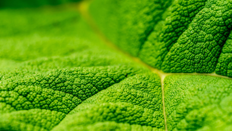 future links green