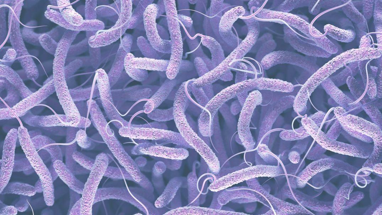 3D-printed Bacteria