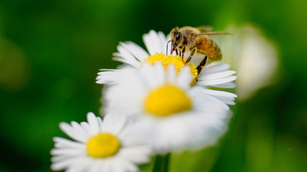 How to Save the Bee Population with a Sheet of Paper - drupa