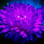 close up of flower in neon light with a black vignette dark mood creative still life in trendy neon